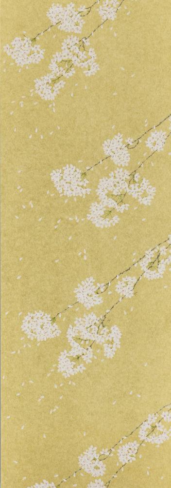 D.C Shiroi hana (Kin/Gold)