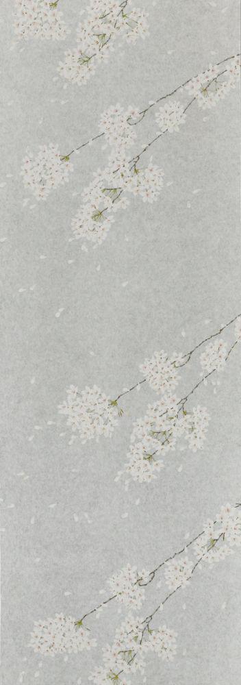 D.C Shiroi hana (Gin/Silver)